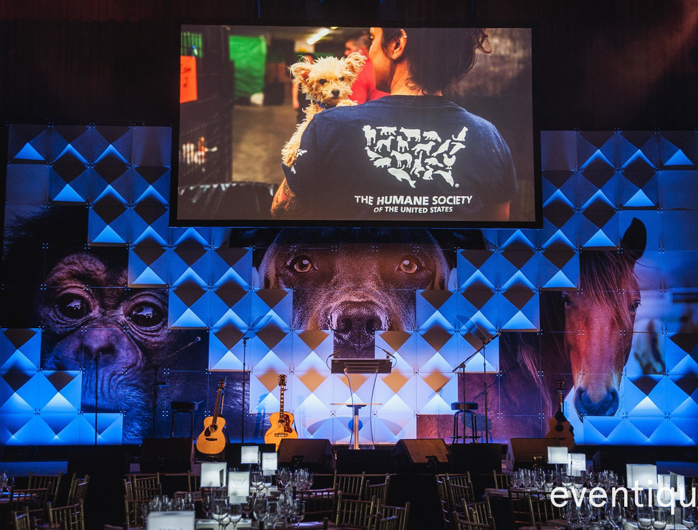 PYRAMID PEEKS THROUGH THE STAGE AT THE HUMANE SOCIETY GALA